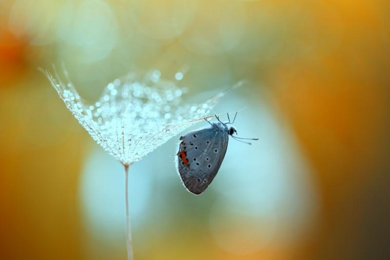 Mirabilis - la vie est merveilleuse